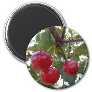 Michigan Cherries Magnet