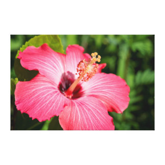 Michigan, Dearborn. Detail Of Pink Hibiscus Canvas Print