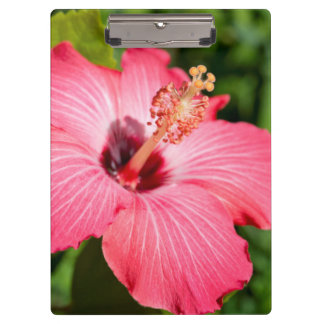 Michigan, Dearborn. Detail Of Pink Hibiscus Clipboard