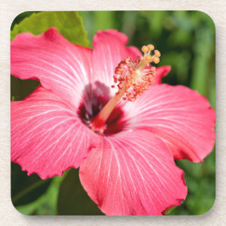 Michigan, Dearborn. Detail Of Pink Hibiscus Coaster