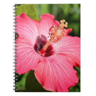 Michigan, Dearborn. Detail Of Pink Hibiscus Spiral Note Book