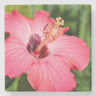 Michigan, Dearborn. Detail Of Pink Hibiscus Stone Coaster