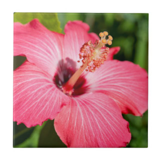 Michigan, Dearborn. Detail Of Pink Hibiscus Tile