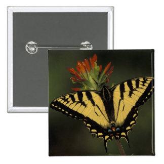 Michigan, Houghton Lake. Tiger Swallowtail on 15 Cm Square Badge
