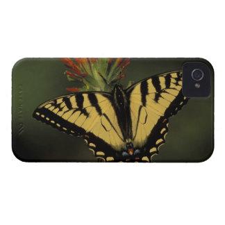 Michigan, Houghton Lake. Tiger Swallowtail on iPhone 4 Case