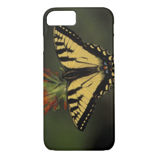Michigan, Houghton Lake. Tiger Swallowtail on iPhone 8/7 Case