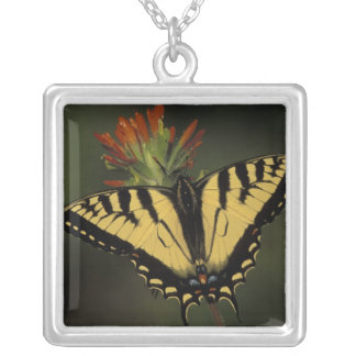 Michigan, Houghton Lake. Tiger Swallowtail on Square Pendant Necklace