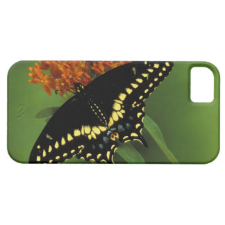 Michigan, Rochester. American Eastern Black iPhone 5 Cover