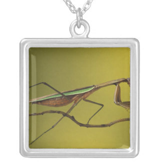 Michigan, Rochester Hills. Praying Mantis on Silver Plated Necklace