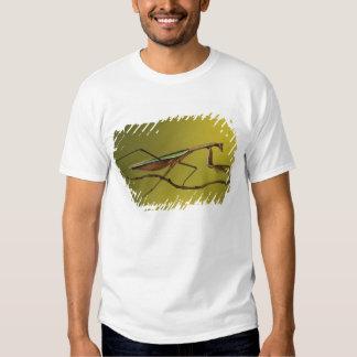 Michigan, Rochester Hills. Praying Mantis on T-shirt
