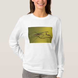 Michigan, Rochester Hills. Praying Mantis on T-Shirt