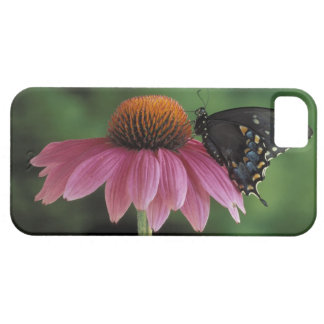 Michigan, Rochester. Spicebush Swallowtail on iPhone 5 Covers