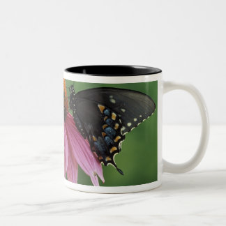 Michigan, Rochester. Spicebush Swallowtail on Two-Tone Coffee Mug