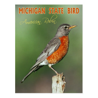 Michigan State Bird - American Robin Postcard