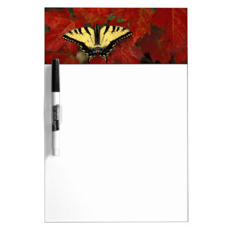 Michigan, Wetmore. Tiger Swallowtail on maple Dry Erase Board