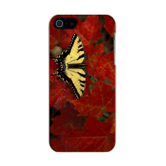 Michigan, Wetmore. Tiger Swallowtail on maple Incipio Feather® Shine iPhone 5 Case