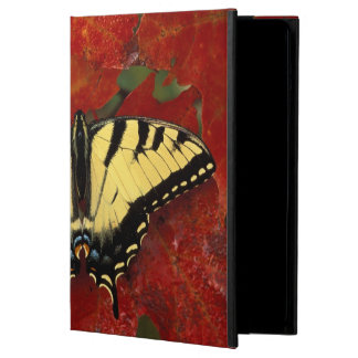Michigan, Wetmore. Tiger Swallowtail on maple iPad Air Cover