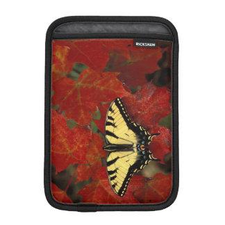 Michigan, Wetmore. Tiger Swallowtail on maple iPad Mini Sleeves