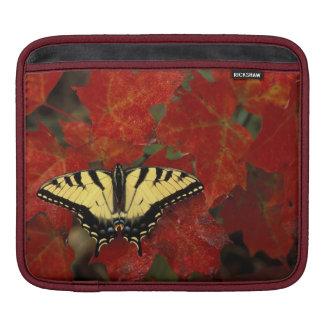 Michigan, Wetmore. Tiger Swallowtail on maple iPad Sleeve