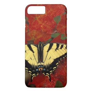 Michigan, Wetmore. Tiger Swallowtail on maple iPhone 7 Plus Case
