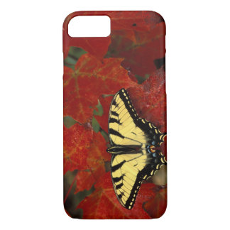 Michigan, Wetmore. Tiger Swallowtail on maple iPhone 8/7 Case