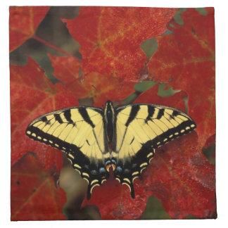 Michigan, Wetmore. Tiger Swallowtail on maple Napkin