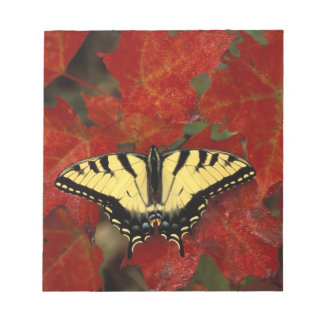 Michigan, Wetmore. Tiger Swallowtail on maple Notepad