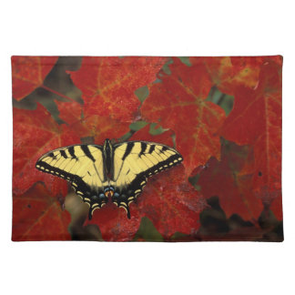 Michigan, Wetmore. Tiger Swallowtail on maple Placemat