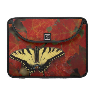 Michigan, Wetmore. Tiger Swallowtail on maple Sleeve For MacBook Pro