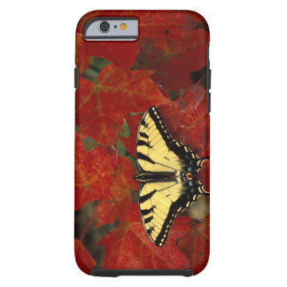 Michigan, Wetmore. Tiger Swallowtail on maple Tough iPhone 6 Case