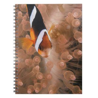 Micronesia, Palau, Anemonefish Spiral Note Books