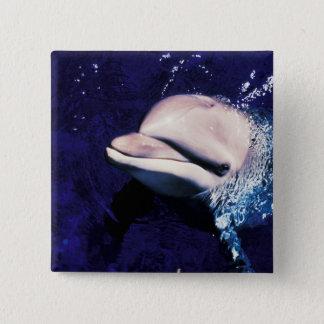 Micronesia, Palau Bottlenose dolphin Tursiops 15 Cm Square Badge