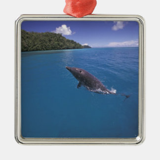 Micronesia, Palau Bottlenose dolphin Tursiops 2 Christmas Ornament
