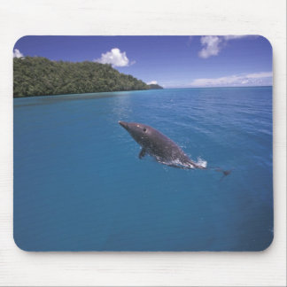 Micronesia, Palau Bottlenose dolphin Tursiops 2 Mouse Mat