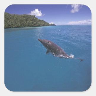 Micronesia, Palau Bottlenose dolphin Tursiops 2 Square Sticker
