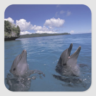 Micronesia, Palau Bottlenose dolphins Sticker