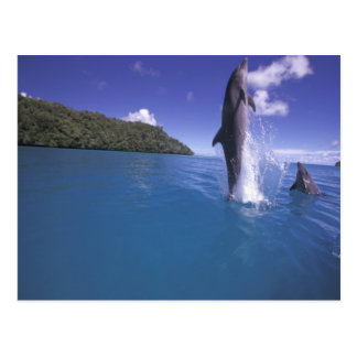 Micronesia, Palau Bottlenose dophin Tursiops Postcard