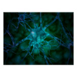Microscopic View Of Multiple Nerve Cells 2 Poster