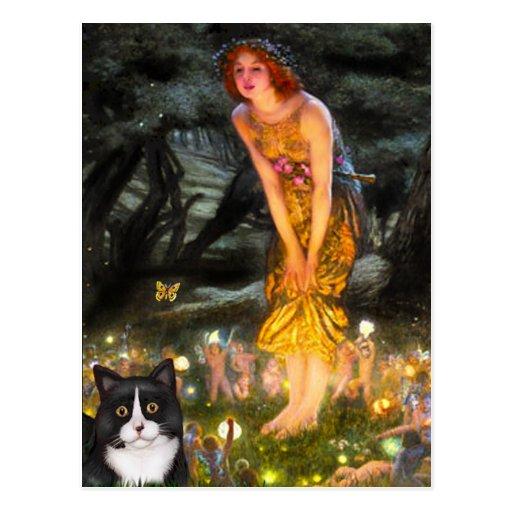MidEve - Am SH black and white cat Postcard