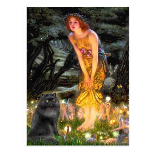 MidEve - black Persian cat Post Card