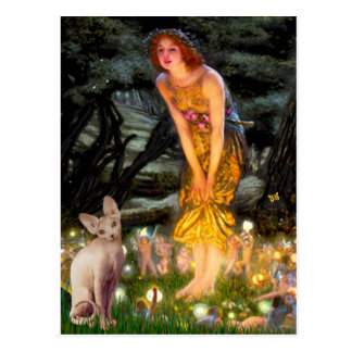 MidEve - Cream Sphynx cat Postcards