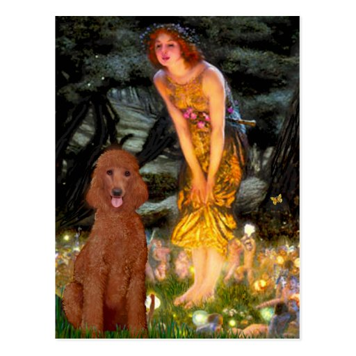 MidEve - Dark Red Standard Poodle #1 Post Card
