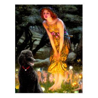 MidEve-Standard Black Poodle (T) Post Cards