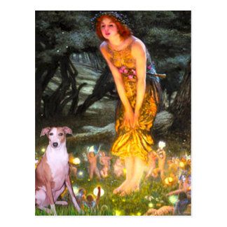 MidEve - Whippet #7 Post Card