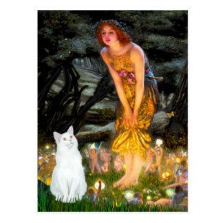 MidEve - White short haired cat Post Cards