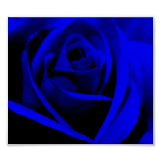 Midnight Blue Rose - poster/print Poster