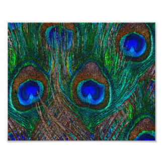 Midnight Peacock Feathers Etching Style Decor Photo Art