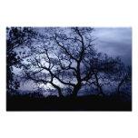 Midnight Sunset Photo Art