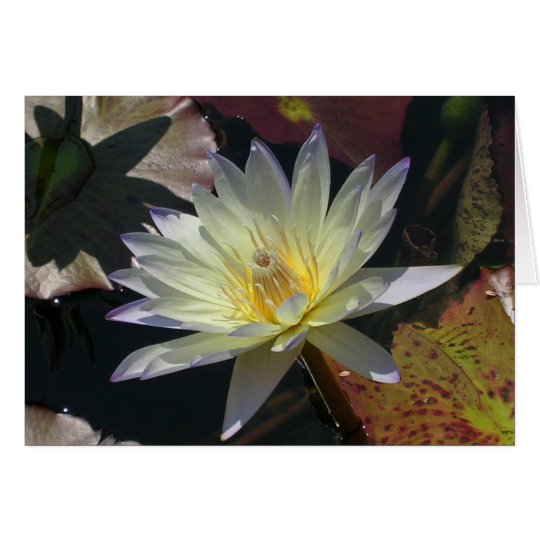 Midsummer Water Lily Card