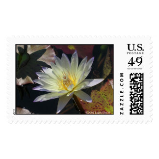 Midsummer Water Lily Stamp
